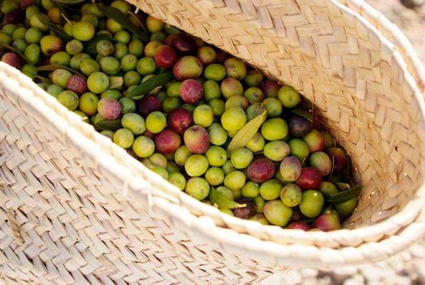Olivenfruchtkorb