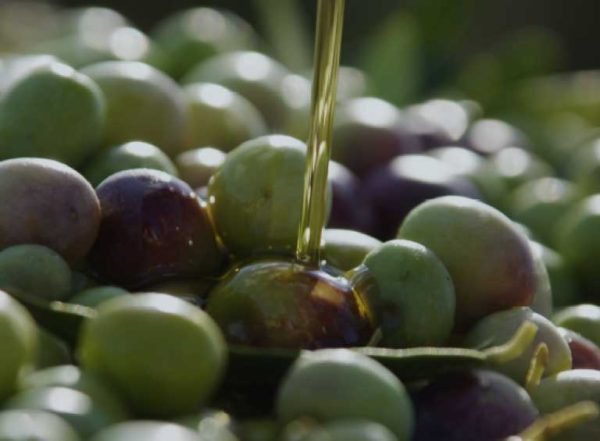 Distribución del aceite de oliva virgen extra