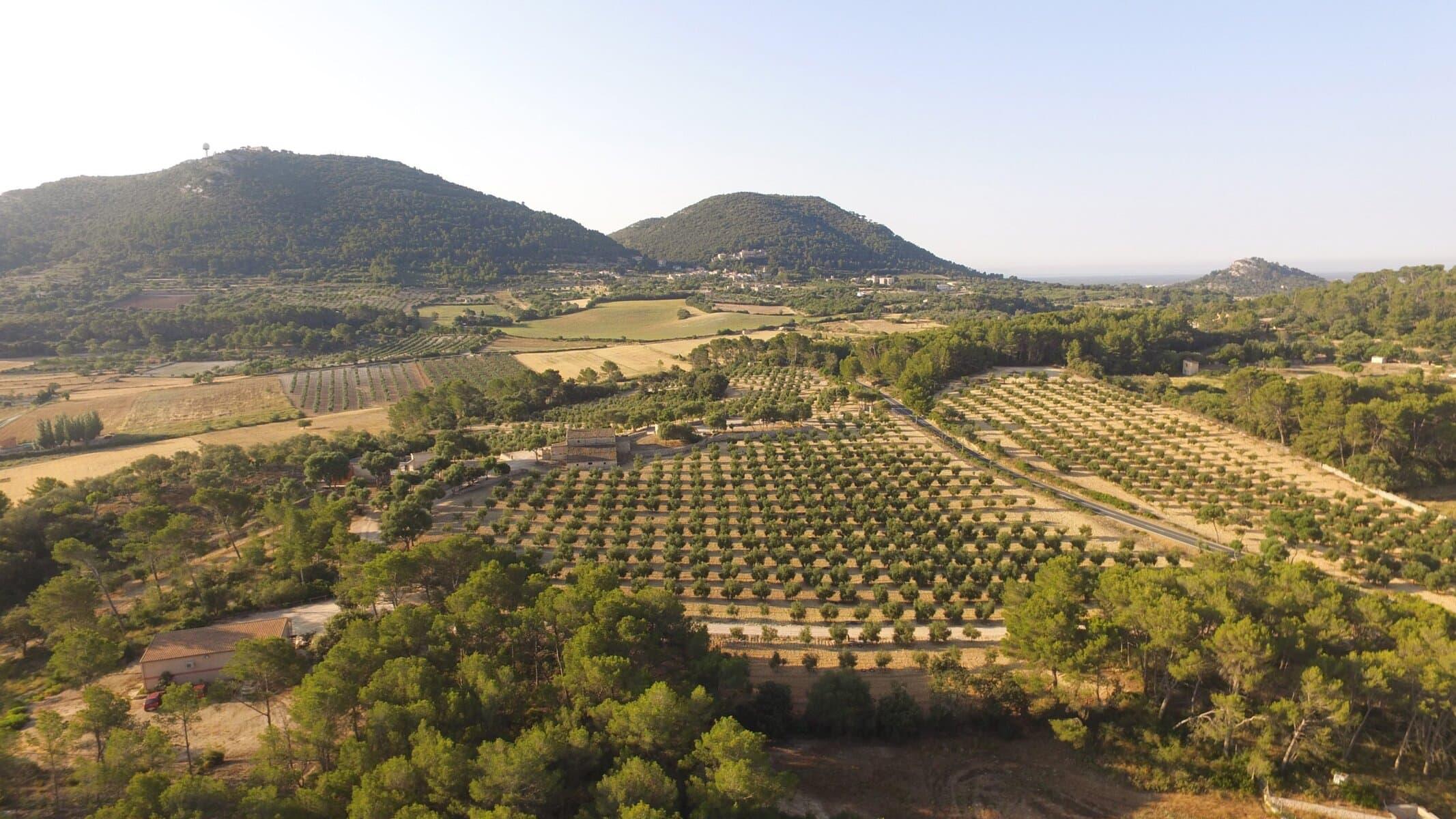 Finca de aceite de oliva arbequina