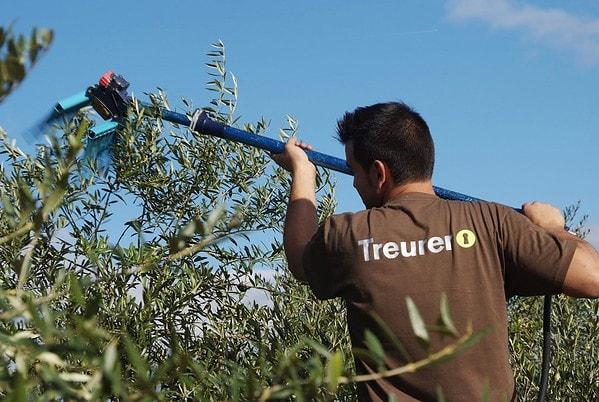 Mallorca Olivenernte