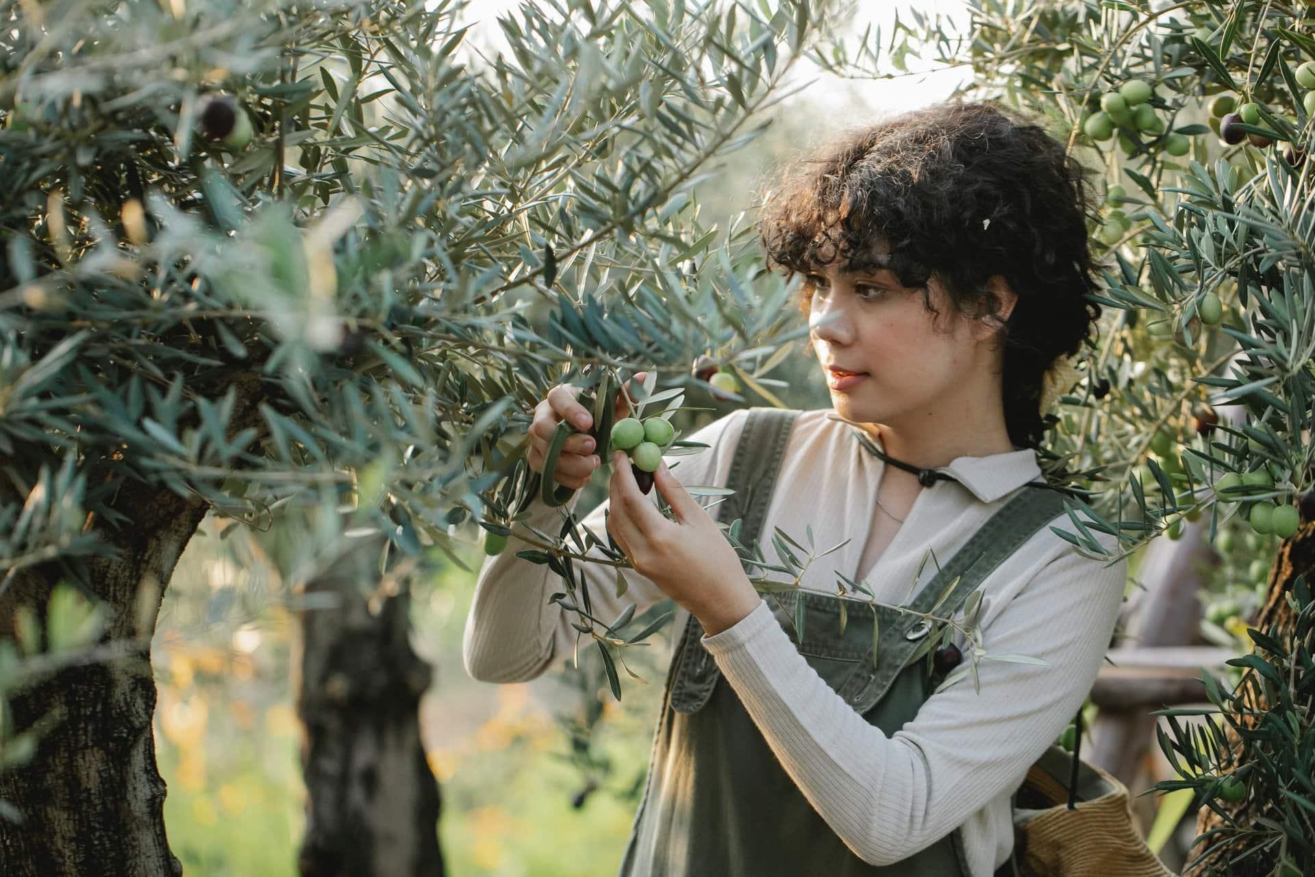calidades del aceite de oliva